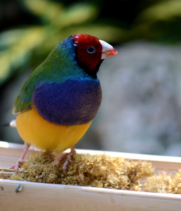 multicolored bird