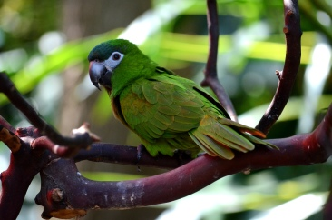 exotic green bird