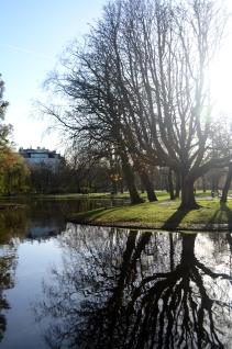 huge tree in vondelpark