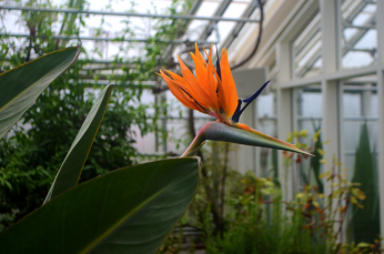 bird of paradise small
