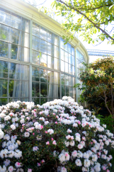 Outside of greenhouse at Botanisk Have