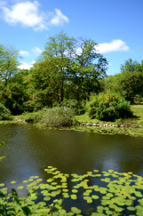 Pond at Botanisk Have