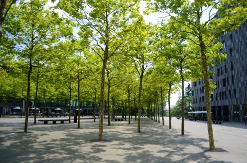 trees small
